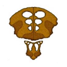 File:Logo-species8472t.jpg