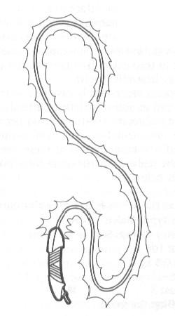 File:NeuronicWhip.jpg