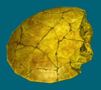 Dathomir amber