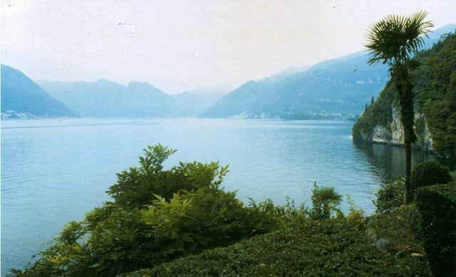 File:Lake country palmtree.jpg