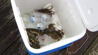 Crabbing (Day 1700 - 7 21 14)
