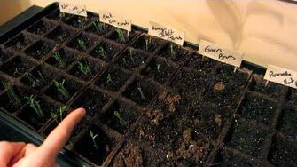 We're Growing Hot Peppers (Day 1559 - 3 2 14)