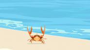 S2 E7 A Crab walking along the beach