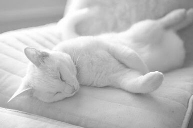 White cat on white couch by pizazz at flickr