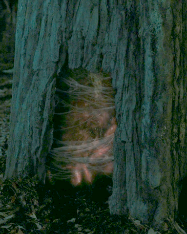 File:The tree portal.png