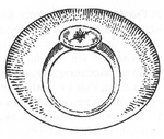 Fortezzan ring