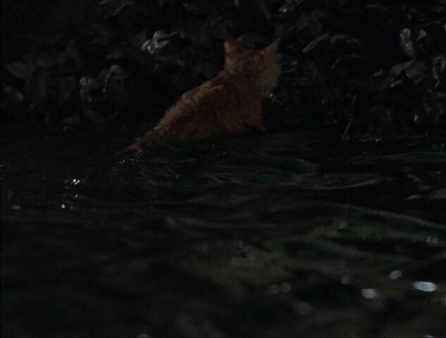 File:Red after the splash.jpg