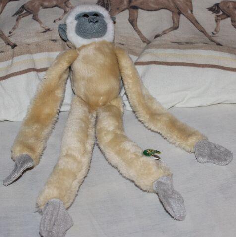 File:Gibbon.jpg