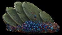 Slanted Shell Plate Fauna