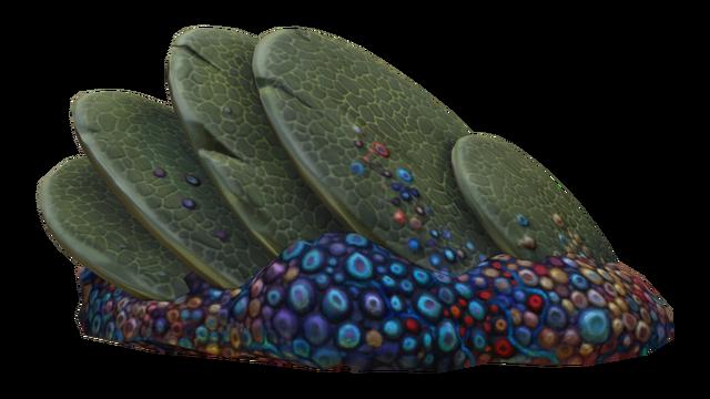 Файл:Slanted Shell Plate Fauna.png