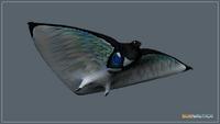 Skyray (5)