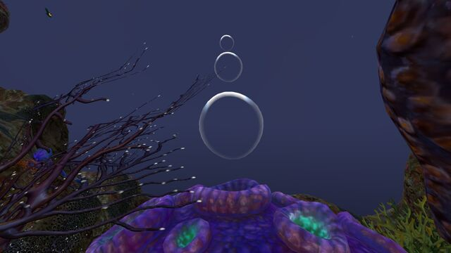 File:Purple Brain Coral (4).jpg