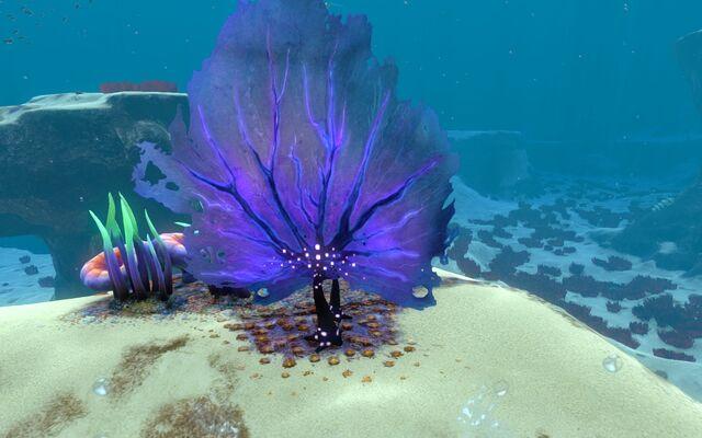 File:Life-form material purple fan.jpg
