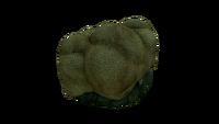 Brain Coral Fauna