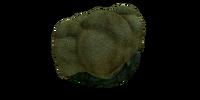 Мозговой коралл