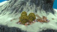 CoralShellPlate02