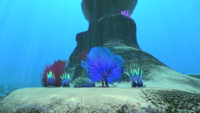 GP Flora and Coral