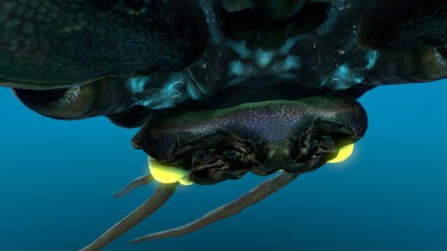 File:Reefback (8).jpg