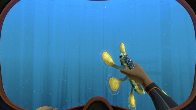 File:Hoverfish (4).jpg