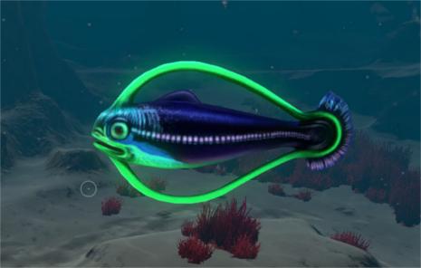 File:Hoopfish.jpg