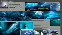 BiosphereSheet Arctic page01