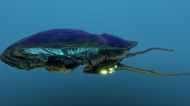 File:Reefback 10.jpg