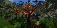 Lantern Fruit
