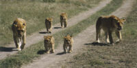 The Horde of Lions