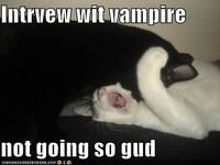Funny-pictures-interview-with-vampire-cats