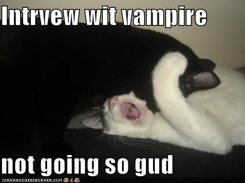 File:Funny-pictures-interview-with-vampire-cats.jpg