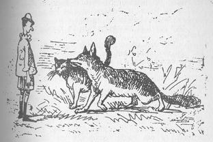 312px-Gatto e volpe