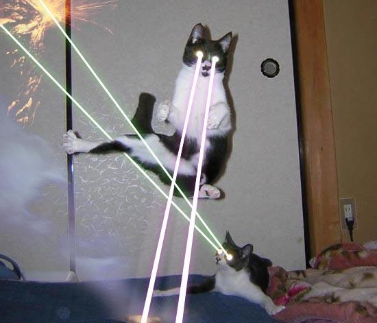 File:LaserCats.jpg