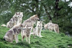 File:The Lost Wolves.jpg