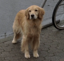 Broward County Dog 1