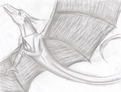 Dragon Drawing3