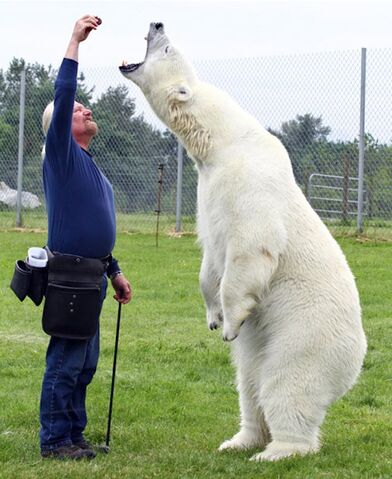 File:Polar bear33.jpg
