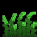 Wild Rye icon
