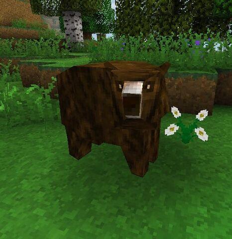 File:Brown bear.jpeg