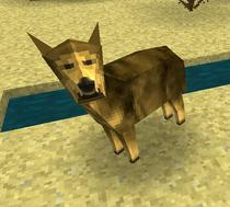 Coyote icon