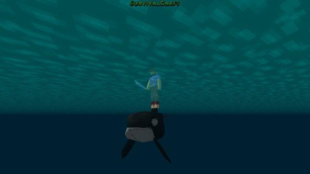File:Orca38.jpg