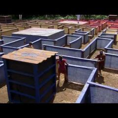 The Final Immunity Challenge.