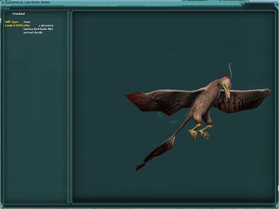 Lanternbird