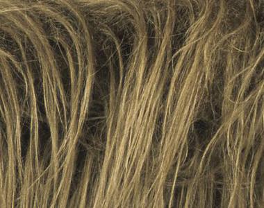 File:Hair.jpg