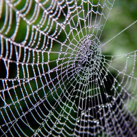 File:Spiderweb-8232.jpg