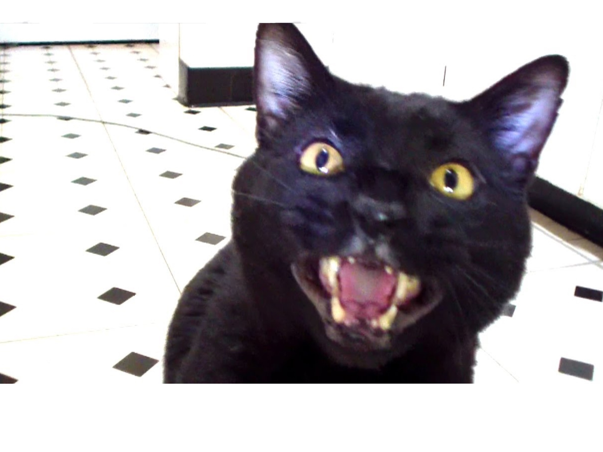 cat spay and neuter clinic near me