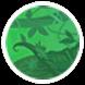 Rain Forest 01