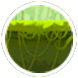 Rain Forest 04