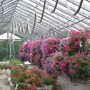 016-greenhouse