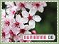 Auriianna-elements0