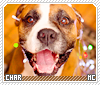 Char-animalia